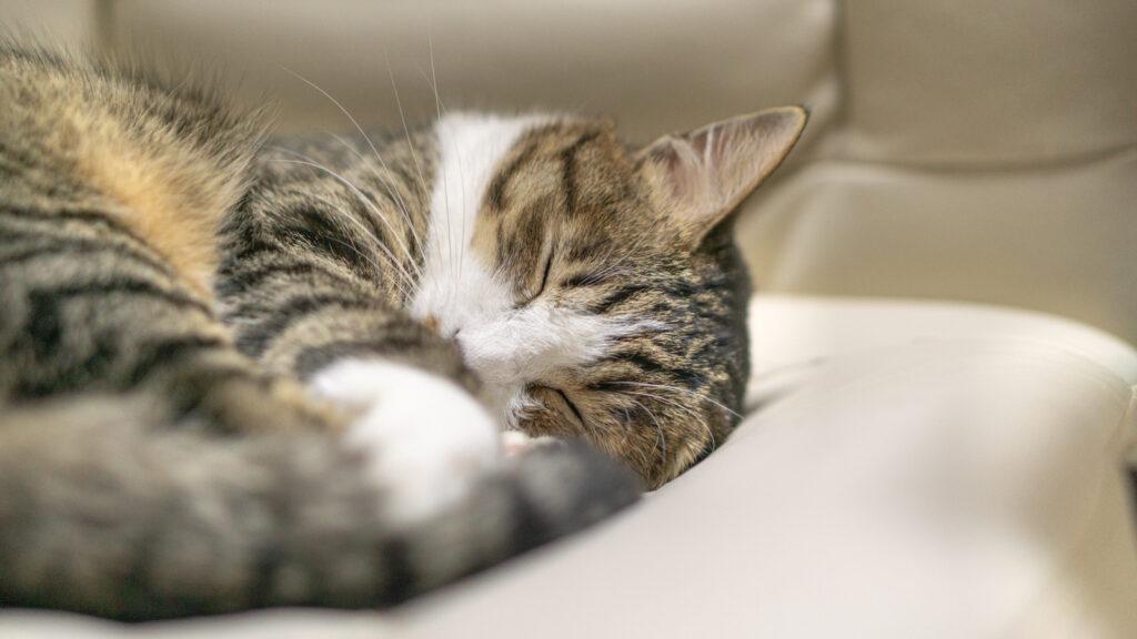 睡眠時間の確保・睡眠の質を上げよう